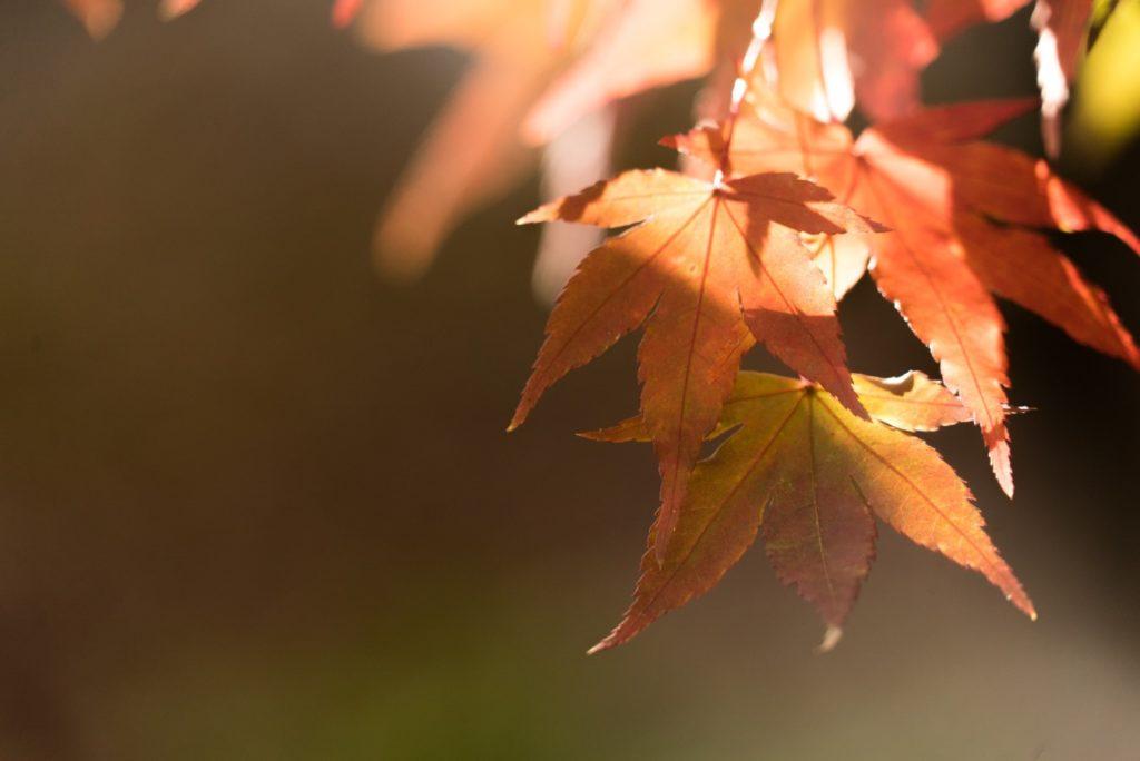 Jesenný pobyt v Tatrách Bachledova Dolina
