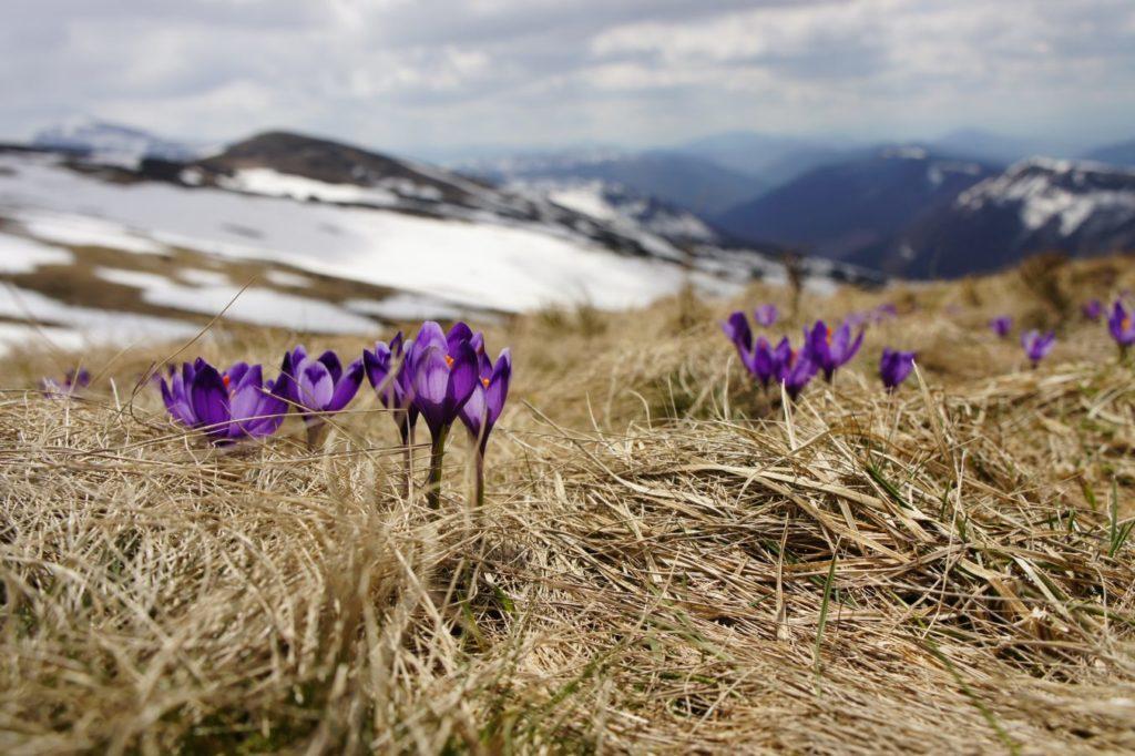 Jar pobyt v Tatrách